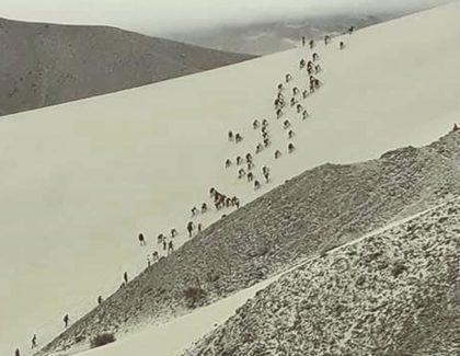 Desert04